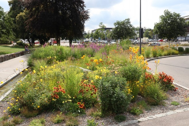 Infoveranstaltung Garten